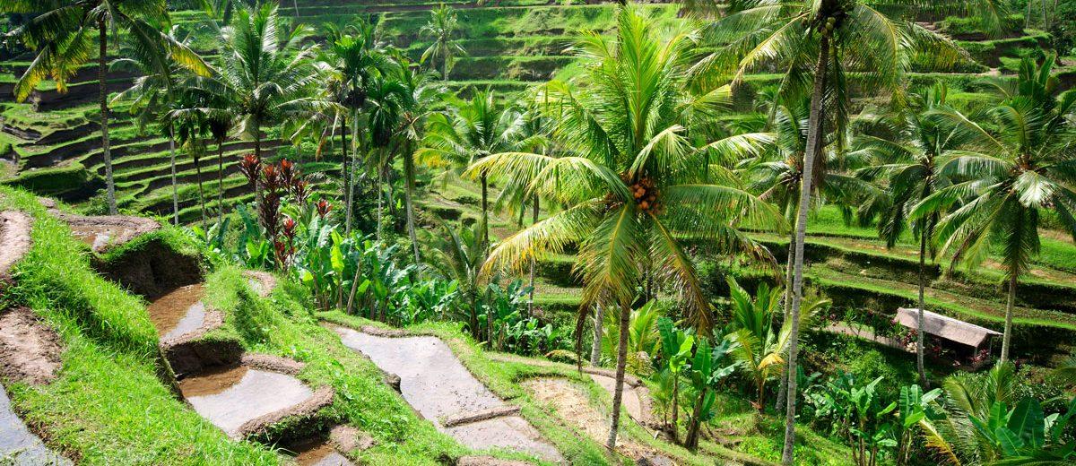 Die besten Tipps für die Bali Reise