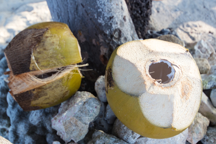 Frische Kokosnuss für uns