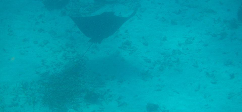 Schnorchel Tour am Belize Barrier Reef