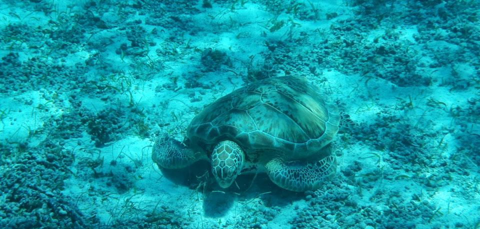 Schnorchel Tour am Belize Barrier Reef 5
