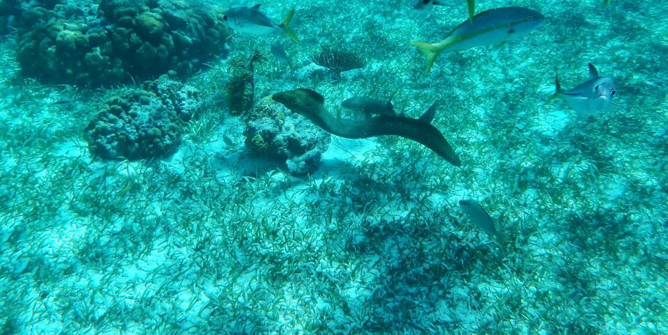 Schnorchel Tour am Belize Barrier Reef 6