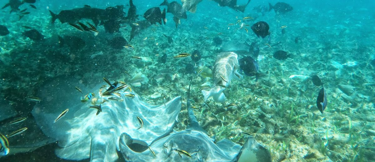 Schnorchel Tour am Belize Barrier Reef 8