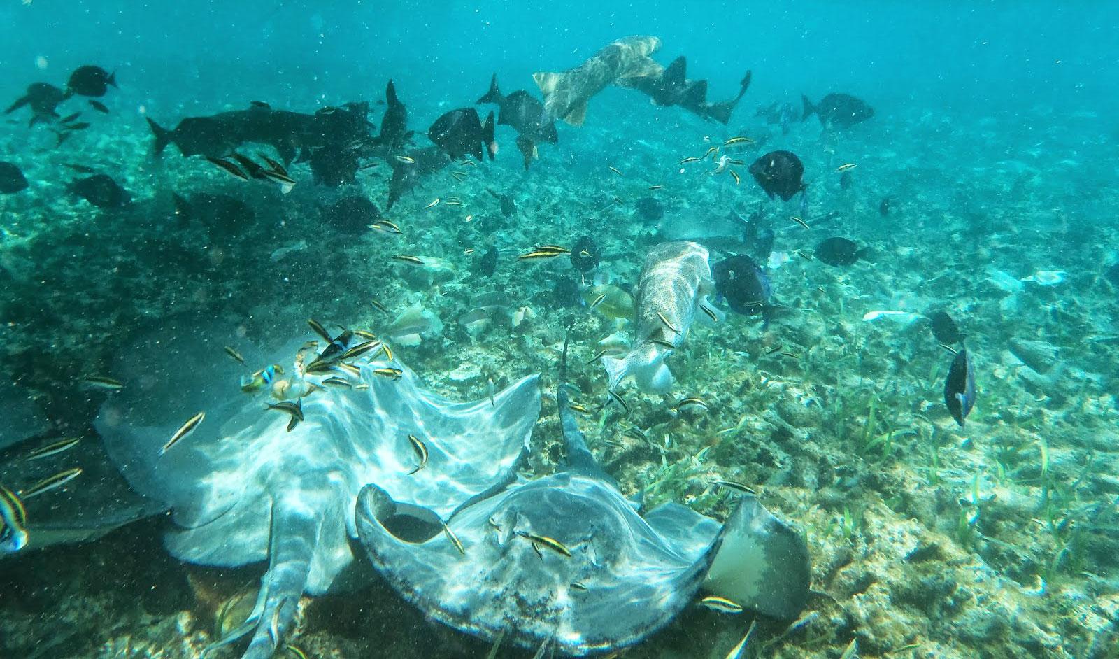 Schnorchel Tour am Belize Barrier Reef 8