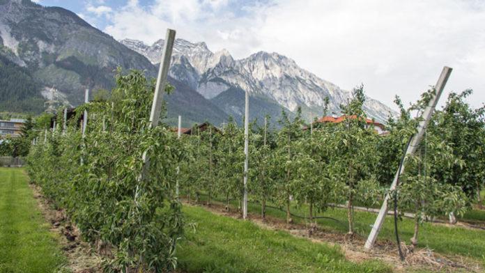 Tiroler Schnapsroute in Absam