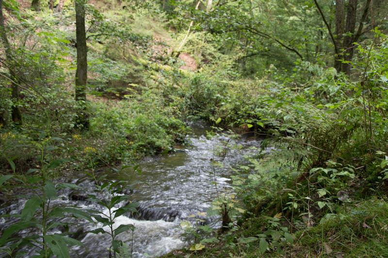 Belgische Ardennen Wandern Tal der Feen