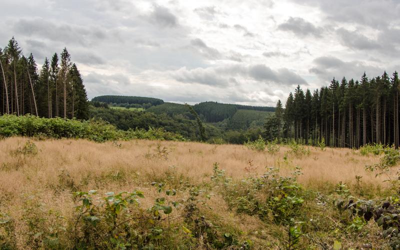 Belgische Ardennen Wandern Tal der Feen höchster Punkt