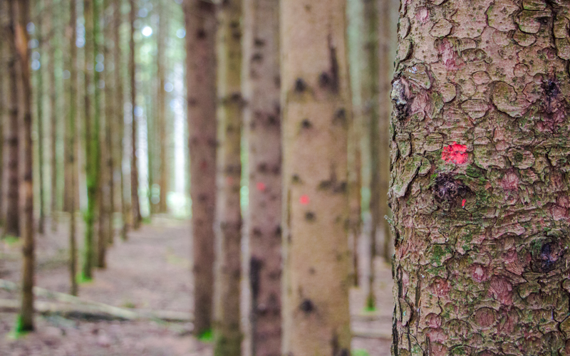 Belgische Ardennen Wandern dichter Wald