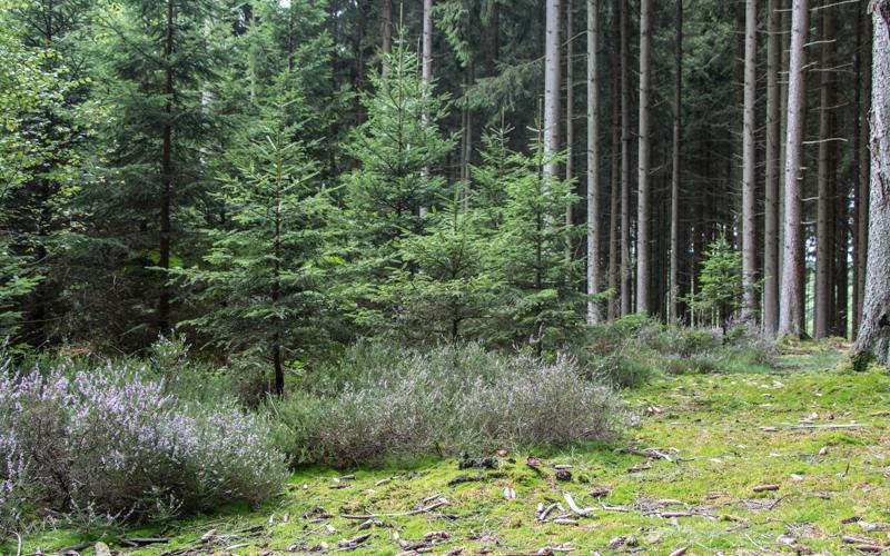 Ardennen wandern reisetipps