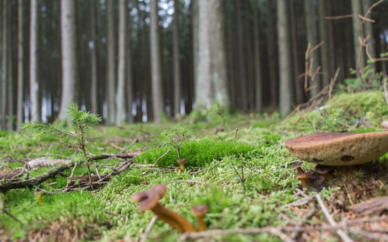 Belgien Ardennen Abenteuer wandern im Wald