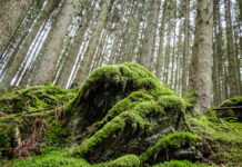 Belgische Ardennen Wandern