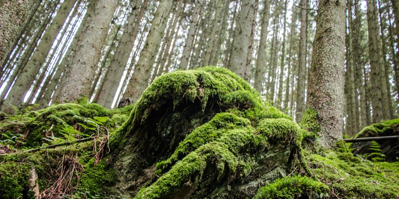 Wandern, Genuss & Abenteuer in Achouffe