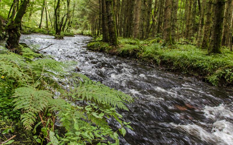 Fluss in den belgischen Ardennen