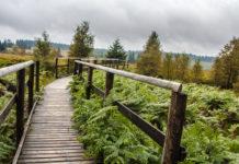 Belgien Wandern Wallonie Hohes Venn