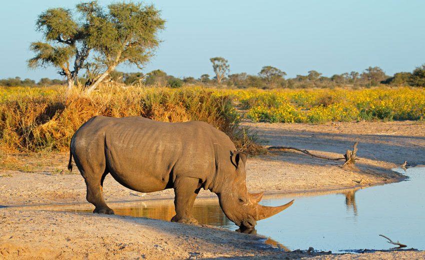 suedafrika-reisen-safari - Reiseblog VIEL UNTERWEGS