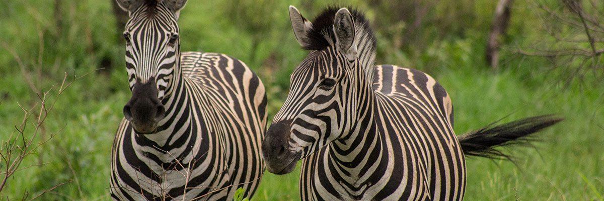 Südafrika Reisetipps mit Routen