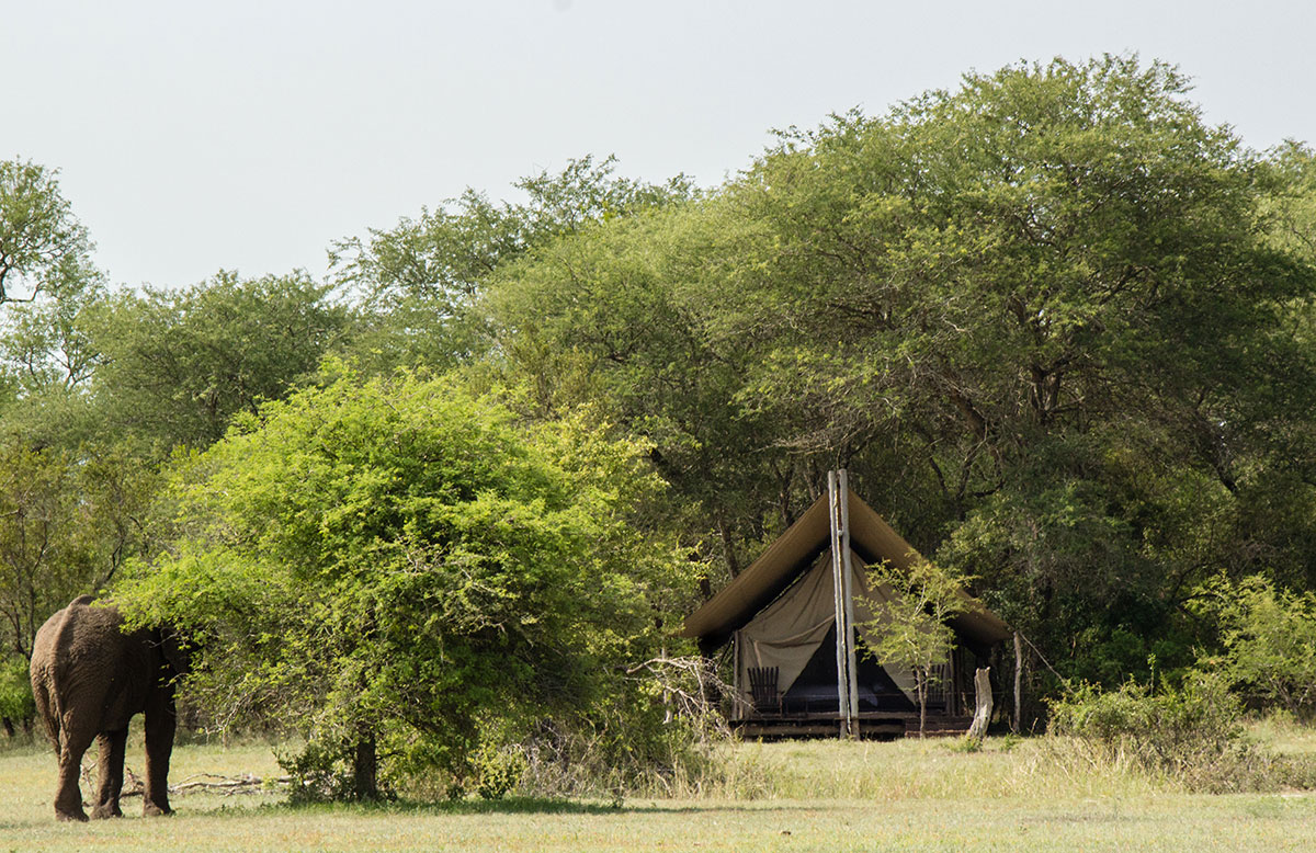 Südafrika Reisetipps Walking Safari zu Fuß im Krüger Nationalpark