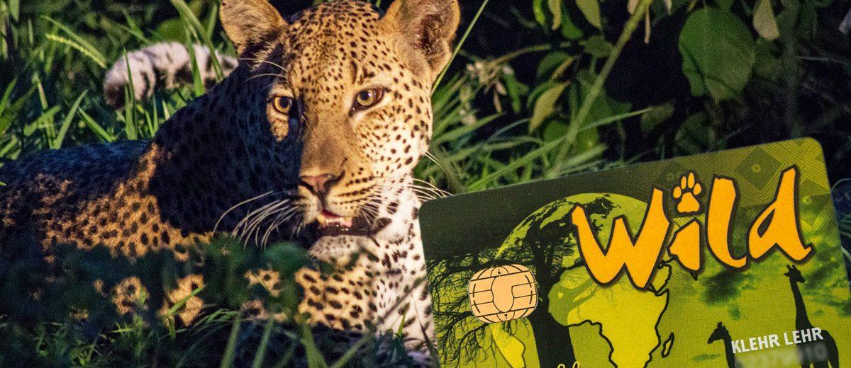 Die Wild Card für Südafrikas Nationalparks kaufen – ab wann lohnt sich ein Kauf?