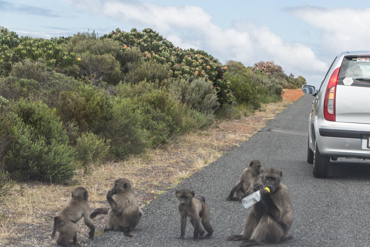 autofahren-suedafrika-tipps-19
