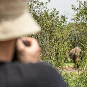 Mkhaya Game Reserve Swasiland Breitmaulnashorn