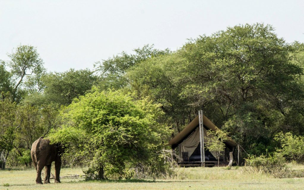 Plain Camp der Rhino Walking Tours.