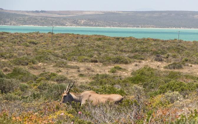 seeberg lookout western cape