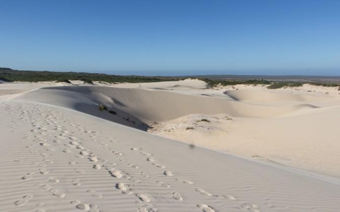 Geheimtipp West Coast Nationalpark in Südafrika