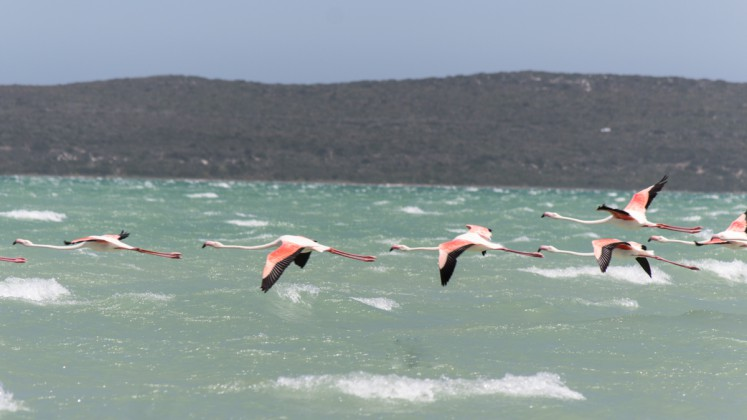 Langebaan Flamingos Südafrika Hightlights