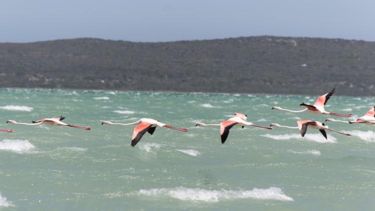 Langebaan Flamingos Südafrika Hightlights