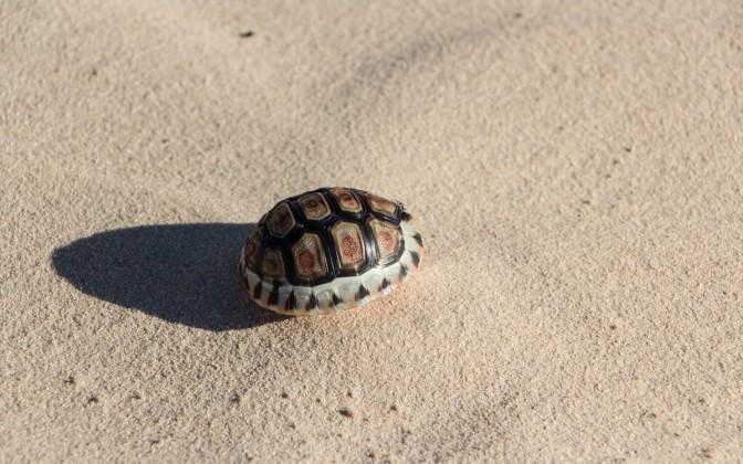 Schildkröte Südafrika West Coast National Park Geheimtipp