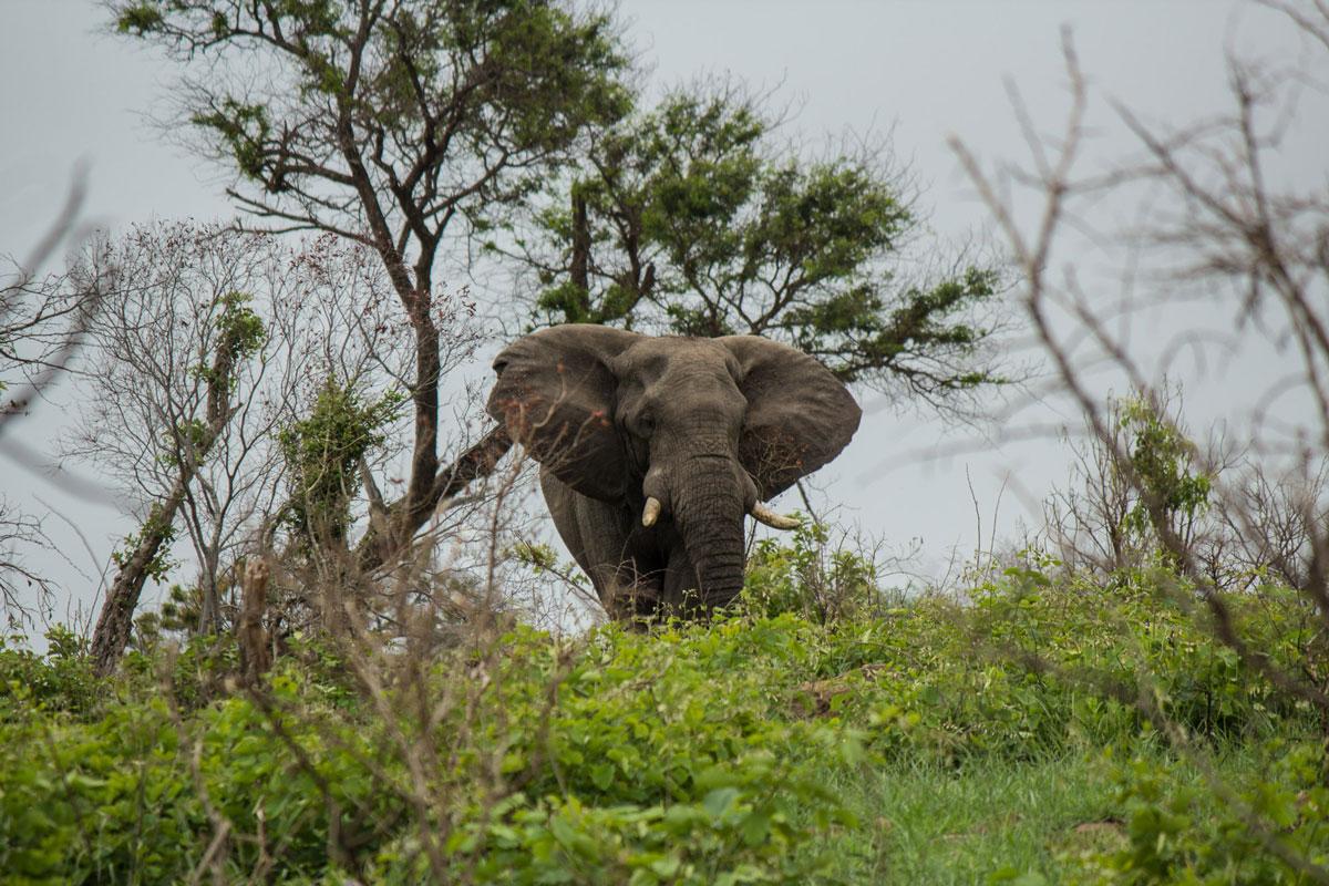 Elefant bei Ankunft