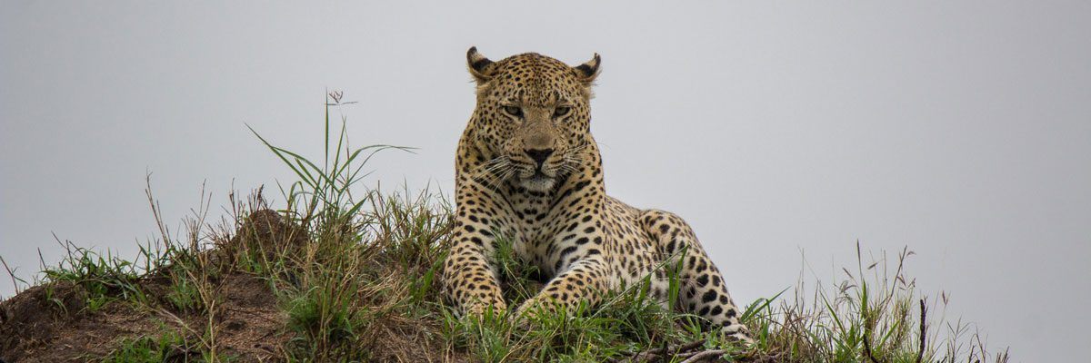 Sabi Sabi – Vorteile eines Private Game Reserves (Sabi Sand)