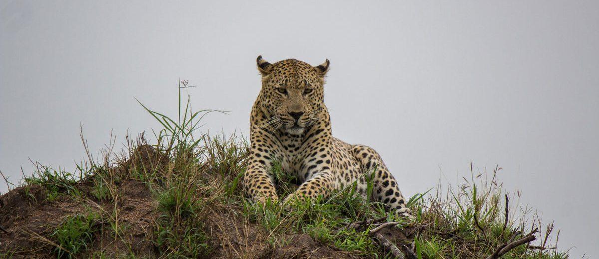 Sabi Sabi – Vorteile eines Private Game Reserves (Sabi Sand)