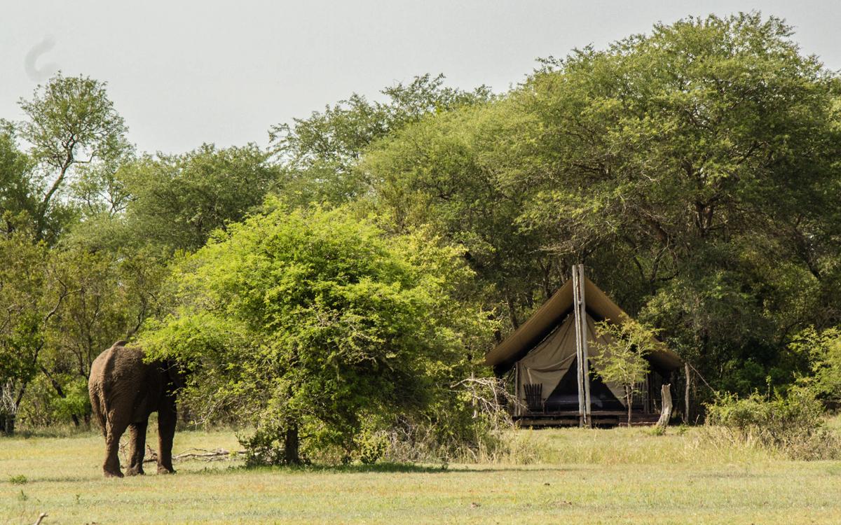 Elefant Rhino Walking Tours
