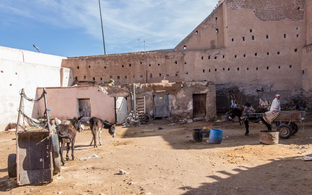 Marrakesch Sehenswürdigkeiten Reisetipps Esel Verleih Marrakesch