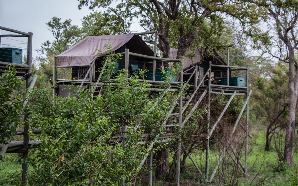 Übernachtung im Baumhaus Rhino Walking Tours