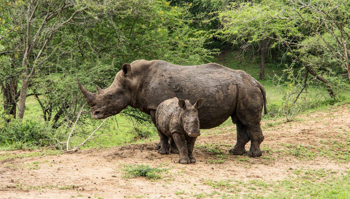 Abseits der Massen: Ab ins Mkhaya Game Reserve im Swaziland