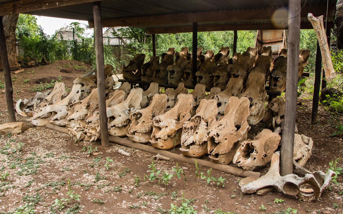 Swasiland Kampf den Wilderern