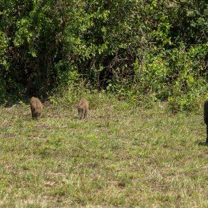 St. Lucia, Hluhluwe Nationalpark und Durban 36