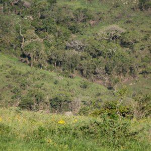 St. Lucia, Hluhluwe Nationalpark und Durban 30