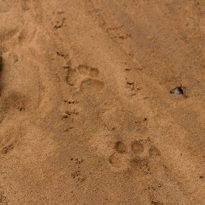 St. Lucia, Hluhluwe Nationalpark und Durban 33