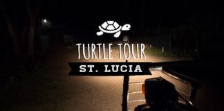 Lederschildkröte St Lucia Wetland Park Turtle Tours