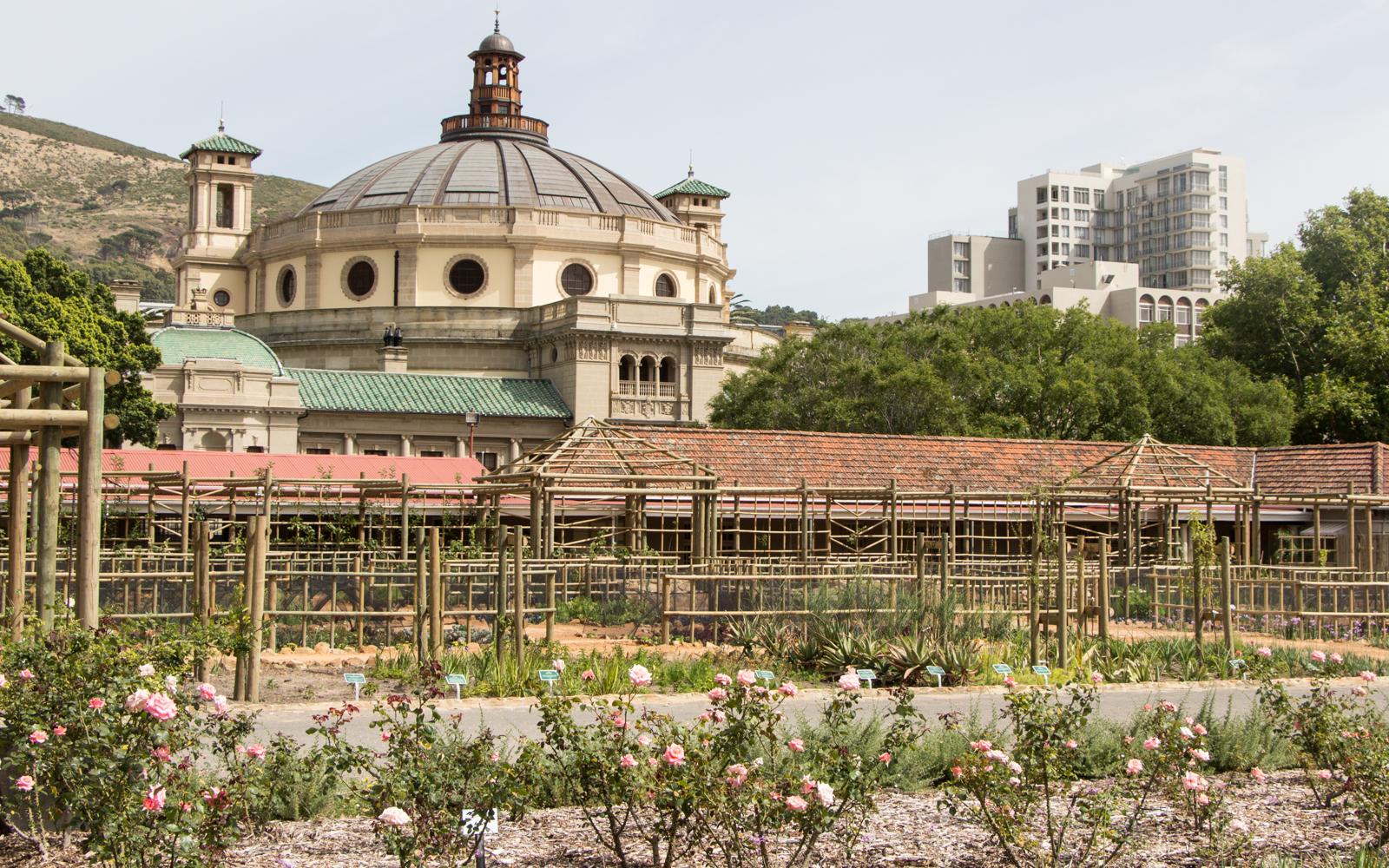 Kapstadt Sehenswürdigkeiten Rosenzucht Companys Garden