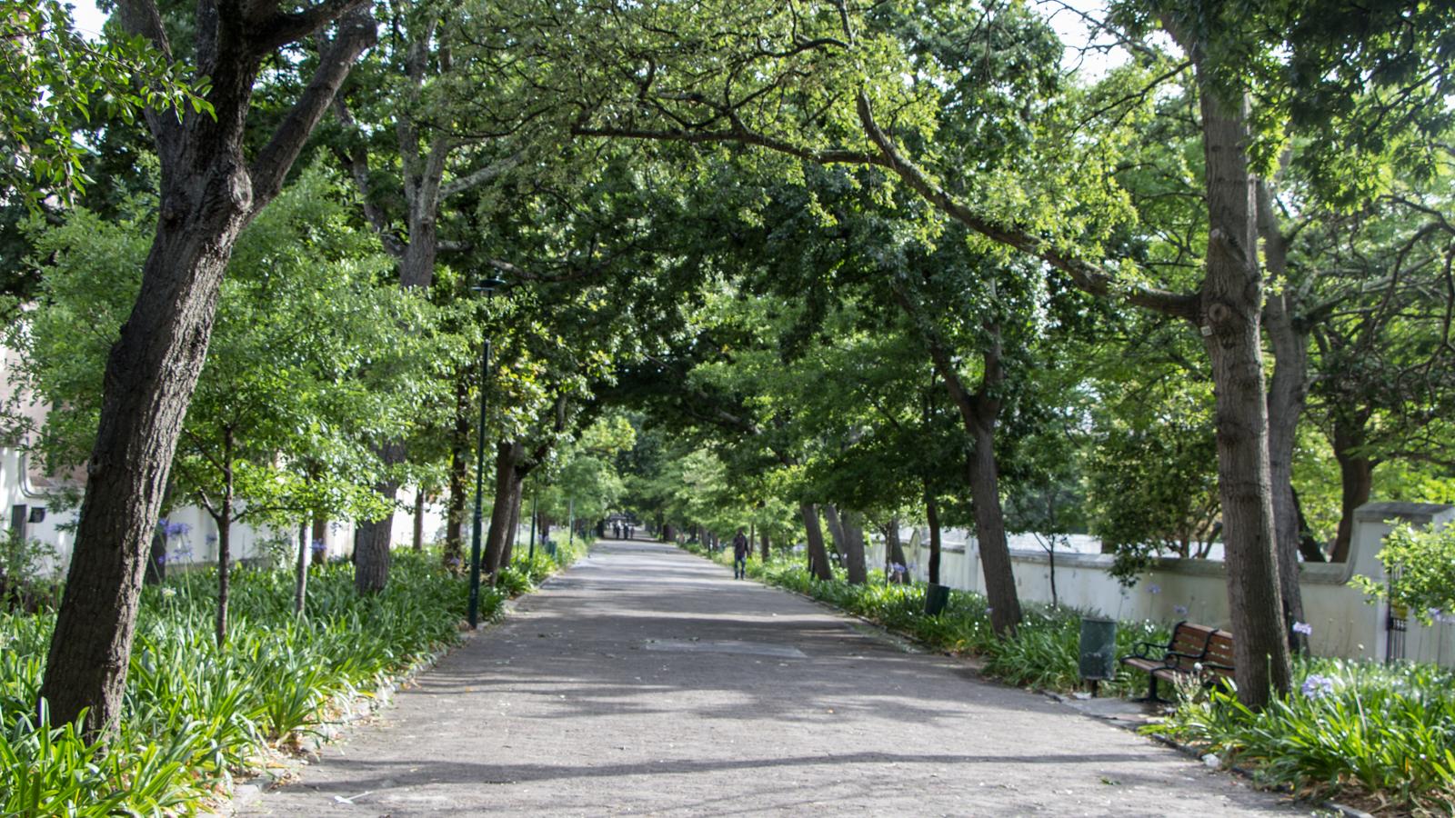 Kapstadt Sehenswürdigkeiten Comapys Gardens Kapstadt Fahrrad