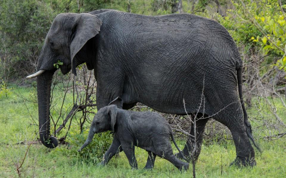 beste-reisezeit-safari-kruger