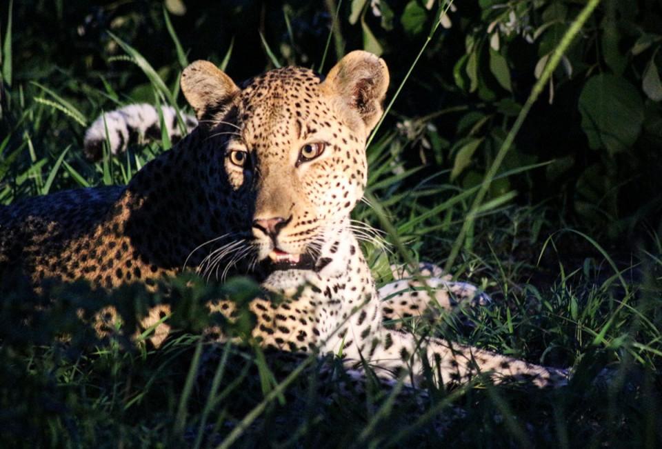 suedafrika-beste-reisezeit-safari