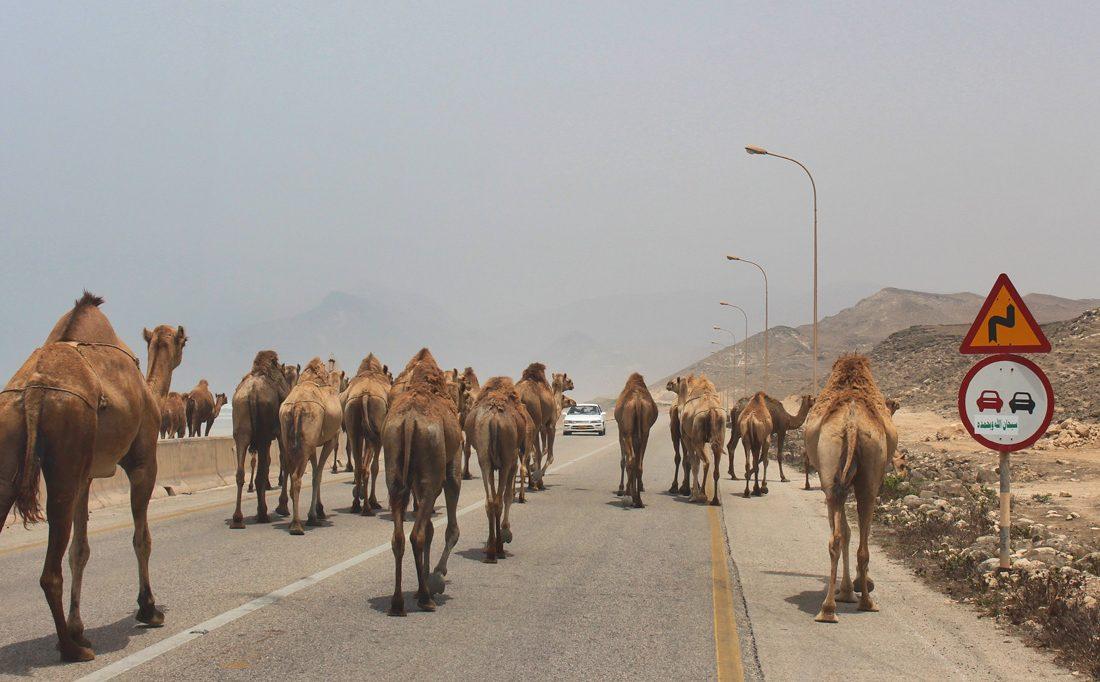 Quer durch den Oman in zwei Wochen