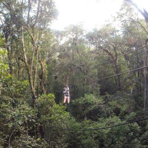 canopy-tsitsikama-national-park