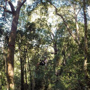 canopy-tsitsikama-national-park Südafrika