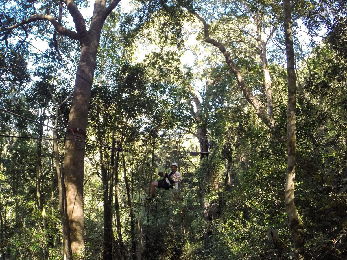 canopy-tsitsikama-national-park2