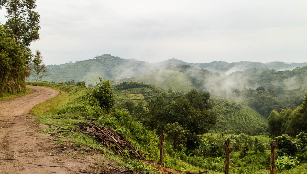 ausgangspunkt-gorilla-trekking-uganda-bwindi-nationalpark